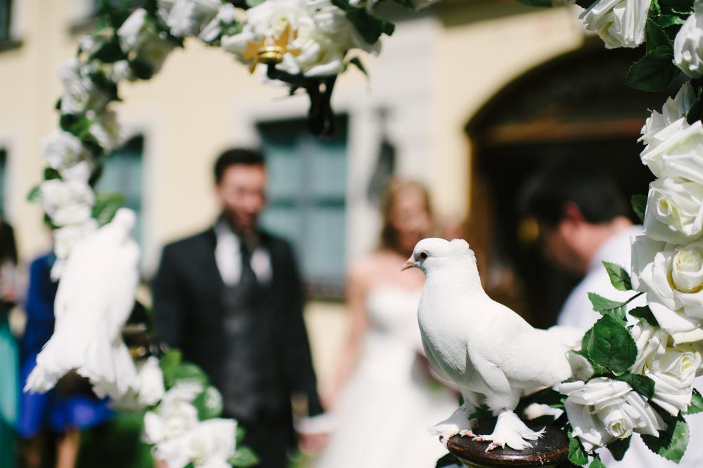 Diese Hochzeitsbräuche solltet ihr vermeiden |Tierfreie Hochzeit feiern!